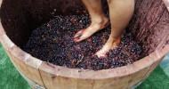 Grape Stomp feature