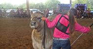 steer feature