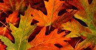 Fall leaves feature