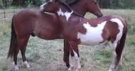 happyhealthhorses2