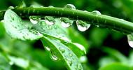rain feature
