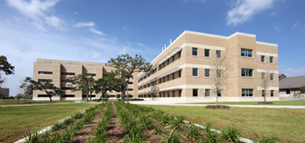 A&M vet research feature