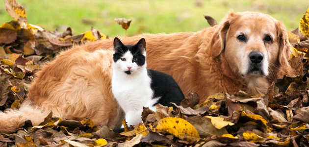 Dog and Cat feature