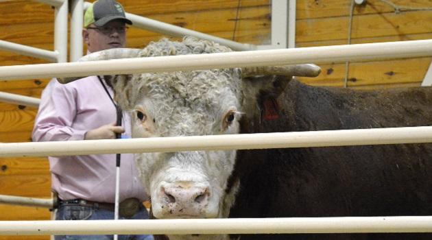 cow-calf-clinic1