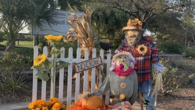 Photo of CHAPPELL HILL HISTORICAL SOCIETY CANCELS SCARECROW FESTIVAL