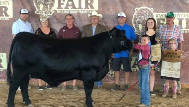 Photo of WASHINGTON COUNTY FAIR LIVESTOCK RESULTS